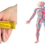 AoFAQ Level 2 Award in Basic Life Support and Management of Anaphylaxis